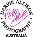 Harvie Allison Photography